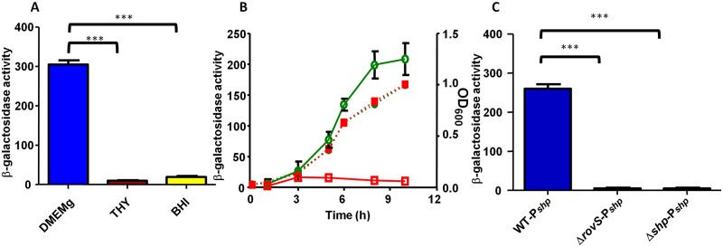 The SHP/RovS cell-to-cell communication system is active in strain NEM316. (A) Effects of culture media on shp expression. β-Galactosidase activity was measured in the WT-P shp strain grown in DMEMg, THY, or BHI medium at 37°C until it reached the early stationary phase (OD 600 , ~0.8). (B) Expression kinetics of the shp and rovS genes. β-Galactosidase activity was measured during the growth of the WT-P shp (○) and WT-P rovS (□) strains. Dotted lines indicate the growth of each strain as measured at an OD 600 , and solid lines indicate β-galactosidase activity. (C) shp expression depends on RovS and SHP. β-Galactosidase activity was measured in the WT-P shp , Δ rovS -P shp , and Δ shp -P shp strains grown in DMEMg at 37°C until they reached the early stationary phase (OD 600 , ~0.8). The data presented are the means ± standard deviations (SD) of results from three independent experiments. Differences were considered to be extremely significant if P values were