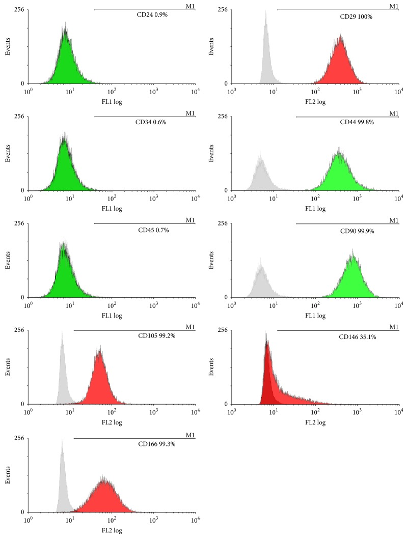 Flow cytometric analyses for immunophenotypic characteristics of hDFCs. hDFCs were positive for CD29, CD44, CD90, CD105, CD146, and CD166 and negative for CD24, CD34, and CD45. Green color stands for being labeled by FITC and red color stands for being labeled by PE.