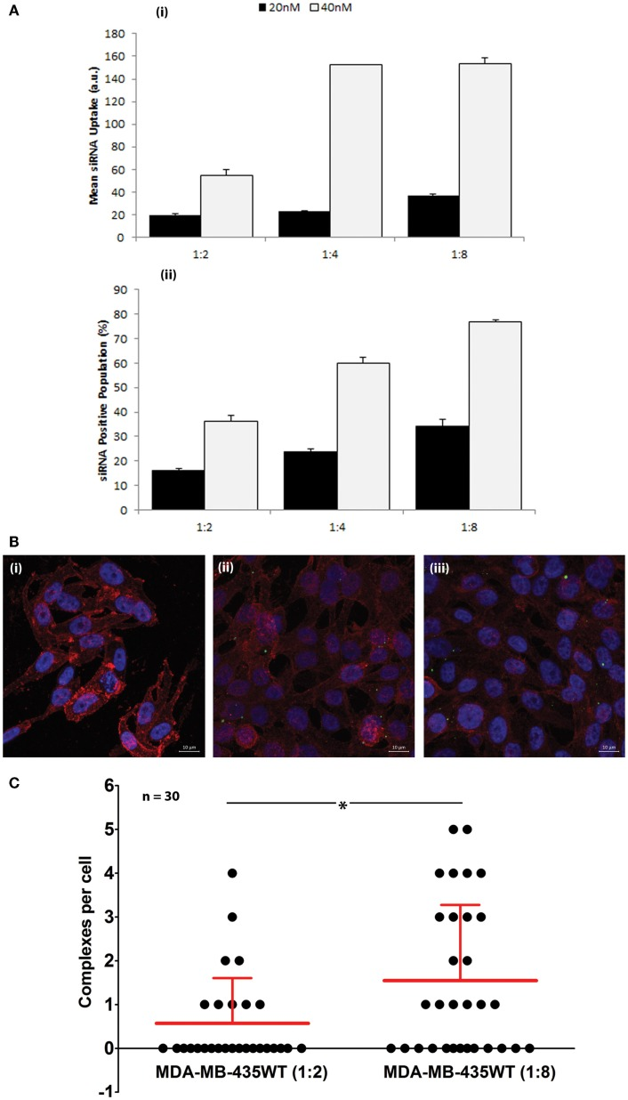 (A) Uptake of FAM-labeled siRNA complexes at 20 and 40 nM siRNA using 1:2, 1:4, and 1:8 siRNA:PEI–LA ratios. The MDA-MB-435WT cells were incubated with the complexes for 24 h and recovered for flow cytometry analysis. The results were summarized as mean FAM-siRNA per cell (top) and FAM-siRNA positive cell population (bottom). (B) Confocal microscopy to determine the uptake of FAM-labeled siRNA complexes at 40 nM siRNA with 1:2 (ii) and 1:8 (iii) siRNA:PEI–LA ratios after 24 h treatment. Purple, red, and green colors represent nuclei, cytoplasm, and siRNA complexes, respectively. Non-labeled scrambled siRNA was transfected as a control in MDA-MB-435WT (i). (C) The number of visible complexes per cell (as quantitated from confocal microscopy images) at 1:2 and 1:8 siRNA:PEI–LA ratios. The uptake was significantly different between 1:2 and 1:8 ratios (* p