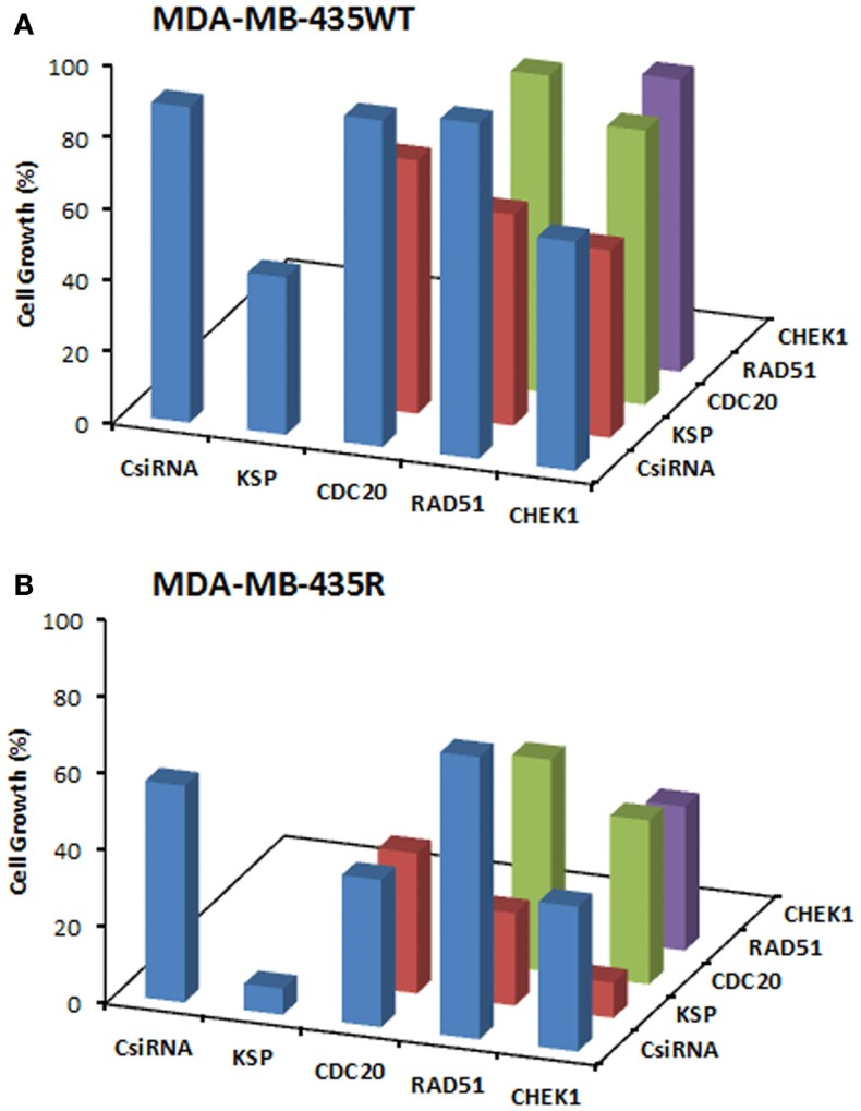 Combinations of siRNA (20 + 20 nM) treatments among KSP, CDC20, RAD51, and CHEK1 siRNA in MDA-MB-435WT (A) with siRNA:PEI-LA ratio of 1:2 and MDA-MB-435R (B) with siRNA:PEI–LA ratio of 1:8 . Scrambled siRNA (CsiRNA) was used as a control on its own as well as in combination with other siRNAs. The SD (not shown) was