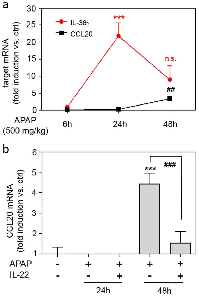 CCL20 expression in murine APAP-induced liver injury. (a) Mice received PBS (n = 6) or APAP (6 h, n = 6; 24 h, n = 9; 48 h, n = 11) for indicated time points. Hepatic CCL20 and IL-36γ mRNA was determined by realtime PCR. Target mRNA was normalized to that of GAPDH (means ± SEM versus ctrl of target mRNA, *** p