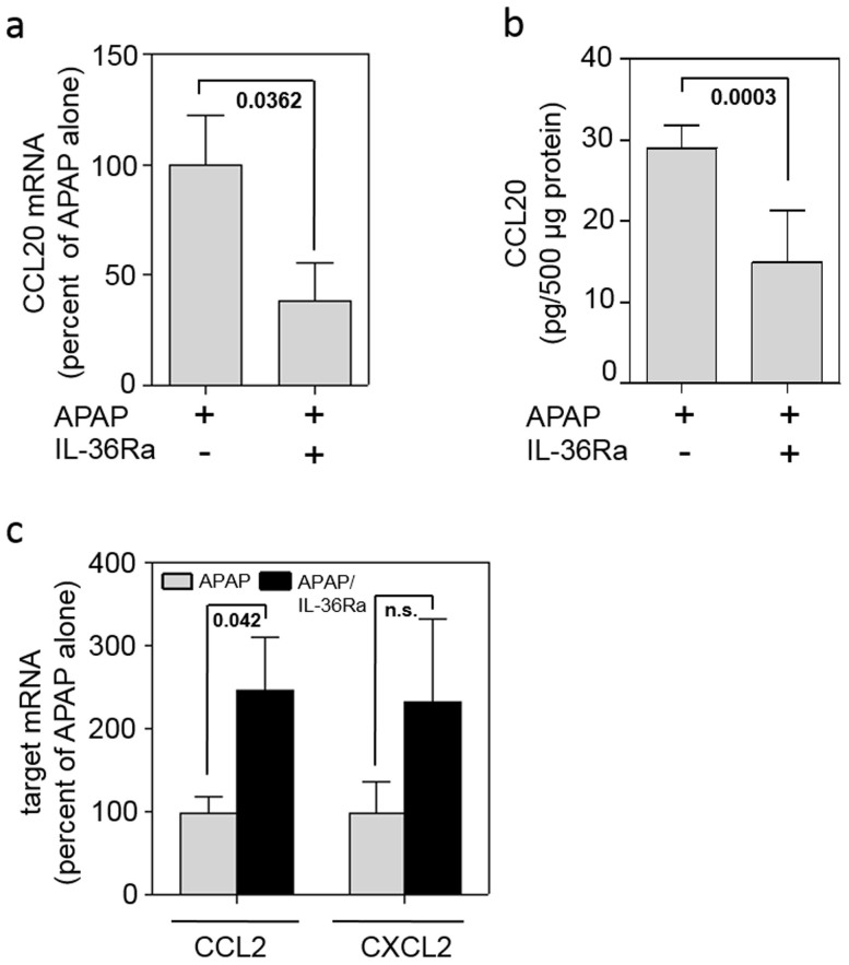 Application of IL-36Ra modulates CCL20 expression in late murine APAP-induced liver injury. (abc) Mice received APAP (n = 11) or APAP/IL-36Ra (n = 12) and were maintained for 48 h. Thereafter, hepatic CCL20 mRNA (a) and protein (b) was determined by realtime PCR and ELISA, respectively. (a) Target mRNA was normalized to that of GAPDH and is shown as percent of APAP alone (means ± SEM). (b) Liver tissue CCL20 content was determined by ELISA, is depicted as pg/500 μg total protein, and shown as means ± SEM. (c) Hepatic CCL2 and CXCL2 mRNA was determined by realtime PCR. Target mRNA was normalized to that of GAPDH and is shown as percent of APAP alone set as 100% (means ± SEM). Statistical analysis, Student's t-test; n.s., not significant.