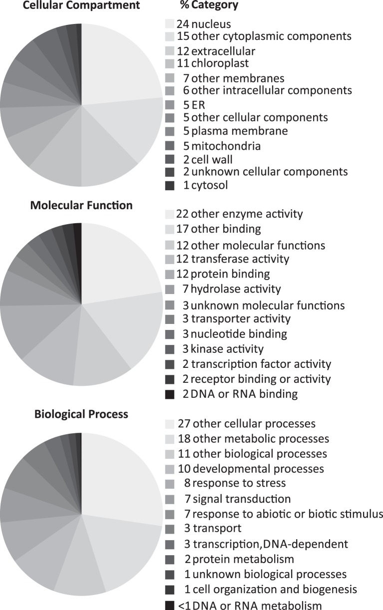 Annotated subcellular localizations, molecular functions and biological processes of the core set of cytokinin-induced genes . The genes listed in Table 2A were evaluated with regard to their GO categorization using the GO categorization tool provided by TAIR ( http://www.arabidopsis.org/tools/bulk/go/index.jsp ), which matches a given set of genes with a reduced set of basic GO terms (GOslim). The resulting table was imported into Microsoft Excel for generating the cake diagrams. The Excel diagrams were reformatted using CorelDRAW to fit them into the frame of a figure.