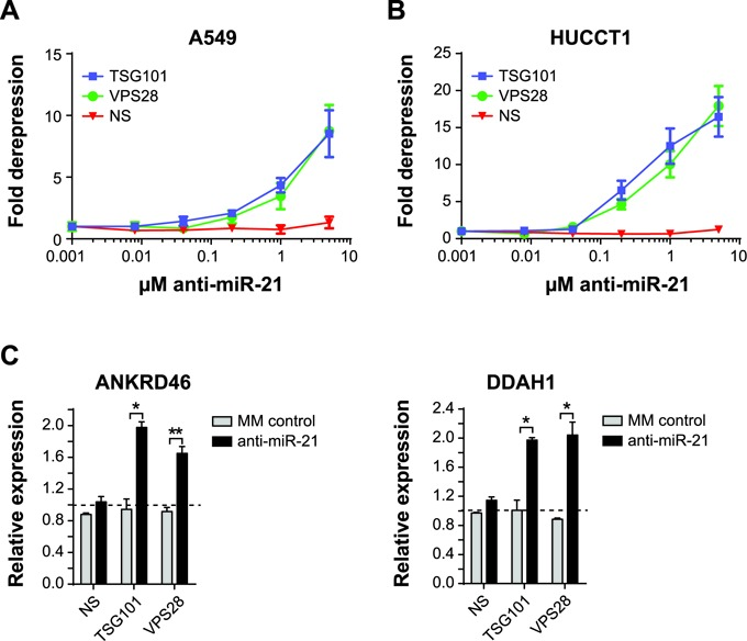 ESCRT-I restores anti-miR-21 uptake in cancer cell lines with inherently poor uptake. ( A ) A549 or ( B ) HUCCT1 cells expressing the miR-21 luciferase were transfected with siRNA targeting non-silencing (NS), TSG101 or VPS28. After 48 h siRNA knockdown, anti-miR-21 was added to culture media for an additional 48 h and then luciferase activity was measured. Mean ± SEM, n = 3. ( C ) A549 cell line was transfected with siRNA targeting NS, TSG101 or VPS28. At 24 h post-transfection the cells were treated by adding PBS, 1 μM anti-miR-21 or 1 μM MM control to the culture media. Following 72 h anti-miR treatment, RNA was isolated and quantitative PCR was performed to measure expression of ANKRD46, DDAH1. The dotted line represents expression of PBS-treated samples. Mean ± SD, n = 2. * P ≤ 0.05, ** P ≤ 0.01.