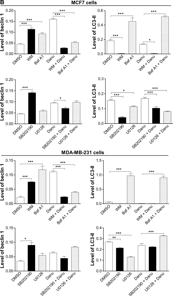 Effects of various chemical modulators on the expression levels of beclin 1 and LC3-II in MCF7 cells and MDA-MB-231 cells. Notes: Cells were pretreated with WM (10 μM), bafilomycin A1 (100 nM), SB202190 (10 μM), or U0126 (10 μM) for 30 minutes, 0.5 μM Danu was added and incubated for a further 24 hours, cells were harvested, and protein samples were subjected to Western blotting assay. ( A ) Representative blots of beclin 1 and LC3-II in MCF7 cells and MDA-MB-231 cells, and ( B ) bar graphs showing the relative levels of beclin 1 and LC3-II. β-actin was used as the internal control. Data are expressed as the mean ± SD of three independent experiments. * P