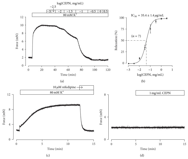 Relaxant effects of CEPN on high K + -induced precontraction. (a) High K + induced a steady-state contraction in a mouse tracheal ring, which was inhibited by CEPN in a concentration-dependent manner. (b) Dose-relaxation curve of CEPN based on the results of 7 different experiments shown in (a). (c) High K + -induced precontraction was completely blocked by nifedipine. This experiment was performed in 8 tracheal rings from 8 mice, and the result was reproducible across experiments. (d) CEPN had no effect on resting tension in 4 rings. These results indicate that the CEPN-induced relaxation might result from blockade of VDCCs.