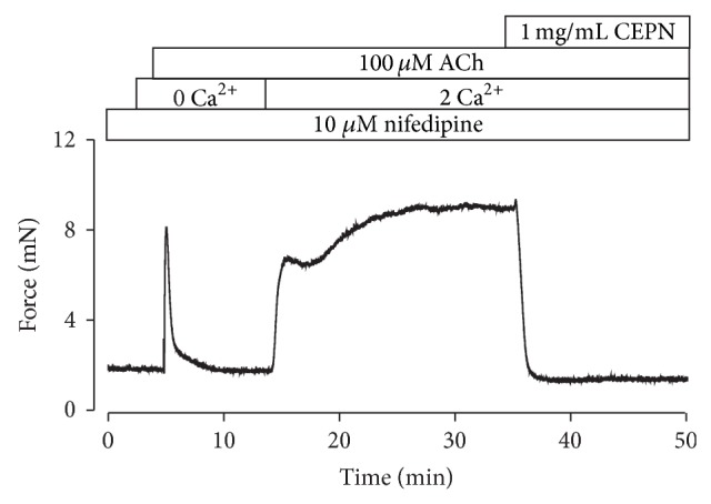 CEPN blocks ACh-evoked Ca 2+ influx. Representative result of 4 experiments in the presence of nifedipine. Under Ca 2+ -free conditions (0 Ca 2+ + 0.5 mM EGTA), ACh induced a fast transient contraction. Following the addition of 2 mM Ca 2+ , a strong sustained contraction occurred, which was entirely reversed by CEPN. These experiments indicate that CEPN inhibits the nifedipine-resistant Ca 2+ influx activated by ACh.