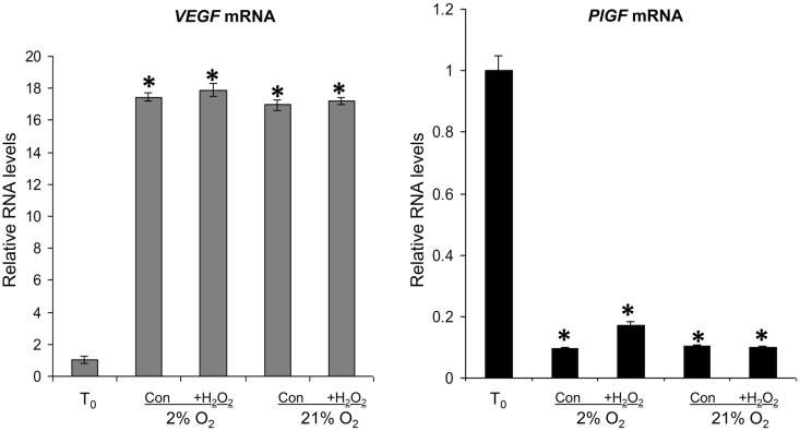 VEGFA and PlGF mRNA in T 0 controls ( T 0 ), and in explants cultured under 2 or 21% O 2 ± 1 mM H 2 O 2 for 6 h. RNA was isolated and relative levels of VEGFA and PlGF mRNA were detected using quantitative real-time RT–PCR. VEGFA and PlGF mRNA levels were normalized to the 18S RNA levels. Significant differences ( P