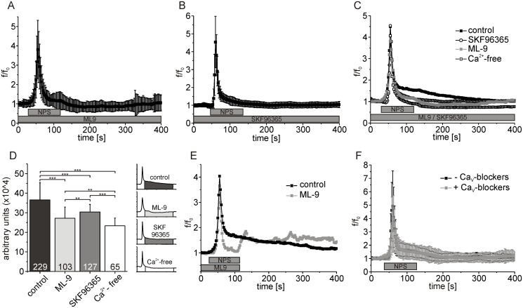 SOCE blockers inhibit the generation of the slow, extracellular component of NPSR1-mediated calcium signals. (A) Mean fluorescence values calculated from 103 NPSR1-expressing neurons recorded in the presence of ML-9 [50 μM]. (B) Mean fluorescence values of 127 cells treated with SKF96365 [15 μM]. (C) Overlay of mean fluorescence values from 229 cells recorded under control conditions, i.e. extracellular solution supplemented with 3 mM CaCl 2 (black, see also Fig. 2B ), 103 neurons recorded in presence of ML-9 (grey, see also Fig. 7A ), 127 cells treated with SKF96365 (empty circles, see also Fig. 7B ), and 65 neurons recorded under calcium-depleted conditions (empty squares, see Fig. 6B ). (D) Statistical analysis of the data shown in (C). The response amplitude has been integrated over time and averaged for different experimental conditions as indicated. (E) Overlay of mean fluorescence of 15 cells treated with NPS and ML-9 [100μM] as indicated (grey) and 207 cells measured under control conditions (black). (F) Normalized mean fluorescence values from 148 neurons expressing NPSR1 from a first application of NPS and a consecutive second application of NPS in presence of Mibefradil [4 μM], Nifedipine [5 μM] and Conotoxin MVIIC [250 nM]. Standard deviations have been omitted for clarification in (C) and (E). Calcium signals were evoked with 500 nM NPS as indicated.