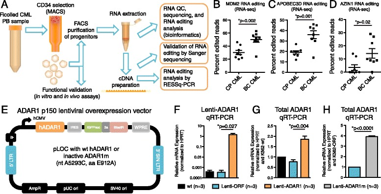 Identification of an RNA editing fingerprint of malignant progenitor reprogramming, and stable ADAR1 overexpression in K562 cells. (A) LSC purification strategy for detection of CSC-associated RNA recoding. (B-D) RNA-sequencing analysis of FACS-purified CP and BC CML LSC [ 1 ] showing A-to-G RNA editing changes in MDM2, AZIN1 and APOBEC3D (n = 8 per group). (E) Lentiviral construct expressing human ADAR1 or a catalytically inactive form (ADAR1m). (F-H) <t>qRT-PCR</t> analysis of <t>cDNA</t> prepared from K562 lines using primers detecting ADAR1 lentivirus (F) and total human ADAR1 (G,H) showing K562 leukemia cells stably transduced with active ADAR1 or inactive ADAR1m express high levels of ADAR1 transcripts compared with vector open reading frame (ORF) control backbone. *p