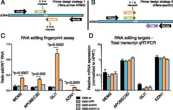 RESSq-PCR assay primer design and RNA editing fingerprint validation in stable human ADAR1-overexpressing cells. (A,B) Primer design strategy showing RNA editing site-specific qRT-PCR (RESSq-PCR) primer design strategy (1) to selectively detect wild-type (A) or edited (G/I) bases using the Tetra-primer amplification refractory mutation system (ARMS) principles (A) . Adaptation of the RESSq-PCR primer design strategy (2) for positions that are not compatible with the Tetra-primer ARMS method due to significant differences in GC content directly upstream and downstream or the edited nucleotide position (B) . FW = forward primer, Rev = reverse primer, Pos = positive control flanking primers. (C) RESSq-PCR analysis of MDM2, APOBEC3D, GLI1 and AZIN1 RNA recoding in stably-transduced K562-ADAR1 cells compared with K562 wt, K562-ORF and K562-ADAR1m lines (n = 2-4 per site). *p