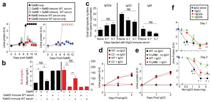 Ag-specific IgG1 prevents IgG3-mediated glomerulopathy BALB/c γ1 - mice (5/gp) were injected with GaMD on day 0 and/or GaMD-immune or rabbit anti-mouse IgD (RaMD) immune WT serum daily on d4-7. a , b , Urine protein ( a ) and d12 serum albumin and BUN levels ( b ). * p