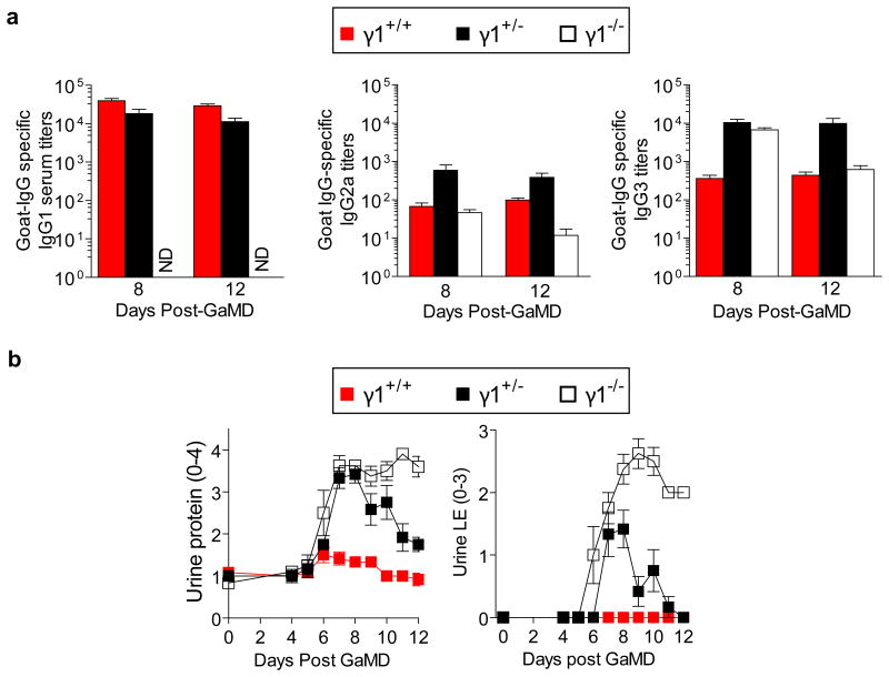 GaMD-immunized γ1 +/- mice generate large IgG3 responses but develop mild renal disease BALB/c mice homozygous (γ1 +/+ ), heterozygous (γ1 +/- ) and null (γ1 -/- ) for a functional γ1 allele (6/gp) were injected s.c. with GaMD. a , Sera were titered for goat IgG-specific IgG1, IgG2a and IgG3 0, 8 and 12 days later. Day 0 titers were zero for all Ig isotypes (data not shown). b , Urine samples from the same mice were assayed for protein and leukocyte esterase. ND = none detected.