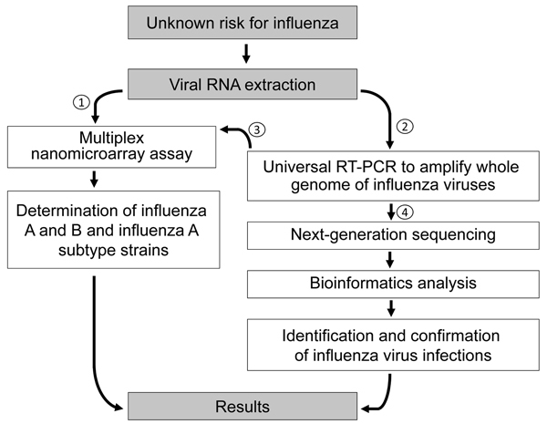 Diagnostic algorithm for identification of an unknown risk for influenza by using nanomicroarray and next-generation sequencing (NGS) assays. To determine the virus type for a suspected influenza virus infection, viral RNA is extracted from a patient sample and initially analyzed in nanomicroarray assay for screening and determining the influenza A and B viruses (1). Once a novel, emerging, or co-infected influenza A and B virus is found, universal reverse transcription PCR (RT-PCR) is performed to generate whole-genome mega-amplicons (2), which can then be retested on the nanomicroarray assay to confirm the initial finding (3) or sent to the central laboratory performing the NGS assay and data analysis for final sequence confirmation (4).