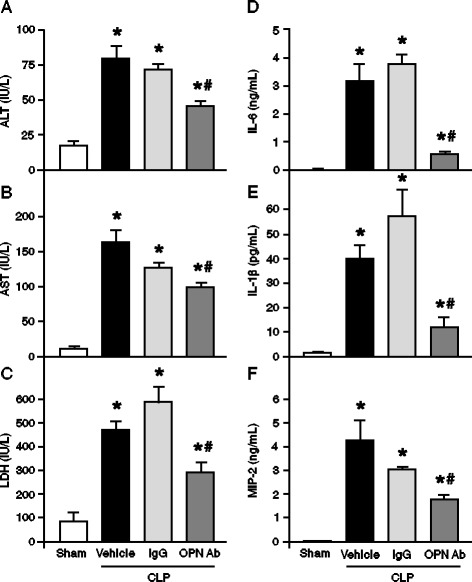 Effect of anti-OPN Ab treatment on plasma levels of organ injury markers and proinflammatory cytokines and chemokine in CLP animals . Sepsis was induced in mice by CLP and anti-OPN Ab or non-immunized IgG control at a dose of 50 μg/mice in 100 μl volumes was injected through the jugular vein. In the vehicle group, 100 μl of PBS was injected in CLP mice via the jugular vein. Blood samples were drawn by cardiac puncture at 20 h of sham-operated, vehicle and anti-OPN Ab-treated mice for measuring (A) ALT, (B) <t>AST</t> and (C) <t>LDH.</t> Similarly, the blood samples collected at 20 h after CLP were measured for (D) IL-6, (E) IL-1β and (F) MIP-2 by ELISA. Data are expressed as means ± SEM (n = 5 mice/group) and compared by one-way ANOVA and SNK method ( * P