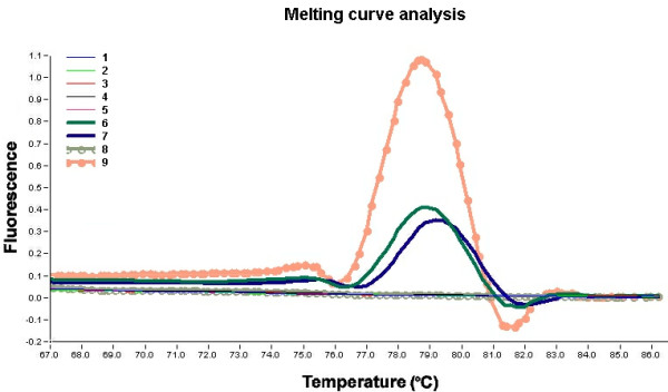 T m analysis of real-time <t>PCR</t> with <t>SYBR</t> Green as fluorescent dye. T m analysis allows the differentiation of specific PCR product (amplicon) from non-specific amplification products, such as primer-dimers. Samples: 1 to 7, patient samples (stool); 8, negative control (water); 9, positive control (NoV positive stool). Amplified products from NoV template RNA can be reliably distinguished from non-specific products by different melting points. The melting temperature for the positive samples was 79.0 +/- 0.5°C. Non-specific products melt at lower temperatures.