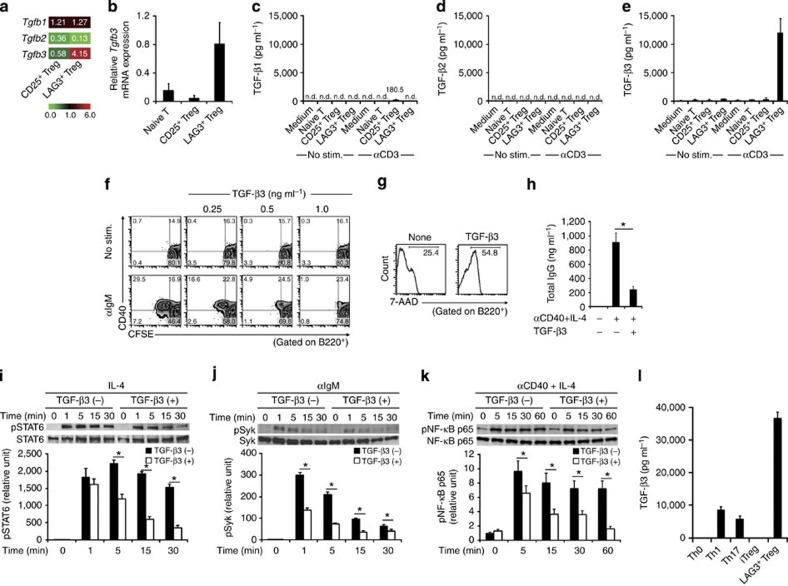 LAG3 + Treg suppress B-cell activation through TGF-β3. ( a ) Microarray comparisons of the gene expression profiles between B6 CD25 + Treg and B6 LAG3 + Treg. Normalized expression values from B6 CD4 + CD25 − CD45RB high naive T cells are depicted according to the colour scale shown. ( b ) Tgfb3 mRNA expression in sorted T-cell subsets taken from the spleens of B6 mice ( n =3 per group). ( c – e ) TGF-β1, 2 and 3 protein levels in the culture supernatants of the indicated T-cell subsets from B6 mice determined using ELISA. Cells were seeded at 1 × 10 5 cells per well ( n =4 per group). ( f ) CFSE-labelled B cells were stimulated with or without anti-IgM mAb in the presence or absence of rTGF-β3 ( n =3 per group). ( g ) Viability of anti-IgM-stimulated B cells in the presence or absence of rTGF-β3 (1 ng ml −1 ) was assessed by 7-AAD ( n =3 per group). ( h ) The effects of TGF-β3 on total IgG production in the culture supernatants of anti-CD40/IL-4-stimulated B cells, determined as in Fig. 1d ( n =3 per group). * P