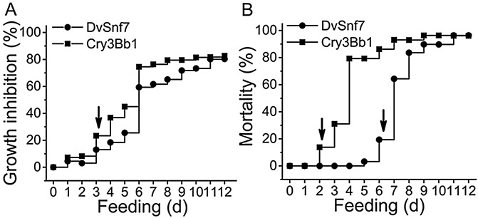 Time-to-effect relationships for SCR growth inhibition (A) and mortality (B) of DvSnf7 (●) and Cry3Bb1 (■) in 12-day diet incorporation bioassays. Arrows indicate the onset of significant growth inhibition or mortality. The time-to-effect for growth inhibition was assessed at a concentration of 0.012 μg DvSnf7/ml diet and 25 μg Cry3Bb1/ml diet which approximated the GI 80 concentration. Each treatment included 15 plates and each plate had 42 individually housed SCR larvae. Water and buffer controls were included with the same number of plates and same number of SCR for each plate. Growth inhibition was calculated based on the reduction in mean body mass of surviving SCR in relation to the appropriate control. The time-to-effect for mortality was assessed at concentrations of 250 μg Cry3Bb1/ml diet and 0.050 μg DvSnf7/ml diet which approximated the LC 95 concentration. Mortality was recorded daily from the same plate with 36 individually housed SCR larvae and was corrected for background mortality.