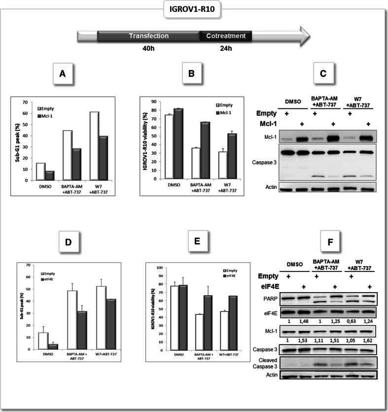 """Mcl-1 enforced expression rescue ovarian carcinoma cells from apoptosis triggered by BAPTA-AM/ABT-737 or W7/ABT-737 combinations. IGROV1-R10 cells were transfected with empty plasmid pcDNA (Empty) or pcDNA containing Mcl-1 ORF (Mcl-1) for 40 h as described in """" Materials and methods """" section. Then cell were treated with DMSO or cotreated either with 10 µM BAPTA-AM and 10 µM ABT-737 or 40 µM W7 and 10 µM ABT-737 for 24 h. a DNA contents were studied for each condition. b Cell viability was assessed by trypan blue exclusion. c Mcl-1 expression and Caspase 3 cleavage were studied by western-blot. IGROV1-R10 cells were transfected with empty plasmid pcDNA (Empty) or pcDNA containing EIF4E ORF (eIF4E) for 40 h as described in """" Materials and methods """" section. Then cell were treated with DMSO or cotreated either with 10 µM BAPTA-AM and 10 µM ABT-737 or 40 µM W7 and 10 µM ABT-737 for 24 h. d DNA contents were studied for each condition. e Cell viability was assessed by trypan blue exclusion. f Mcl-1, eIF4E expression and PARP and Caspase 3 cleavage were studied by western-blot"""