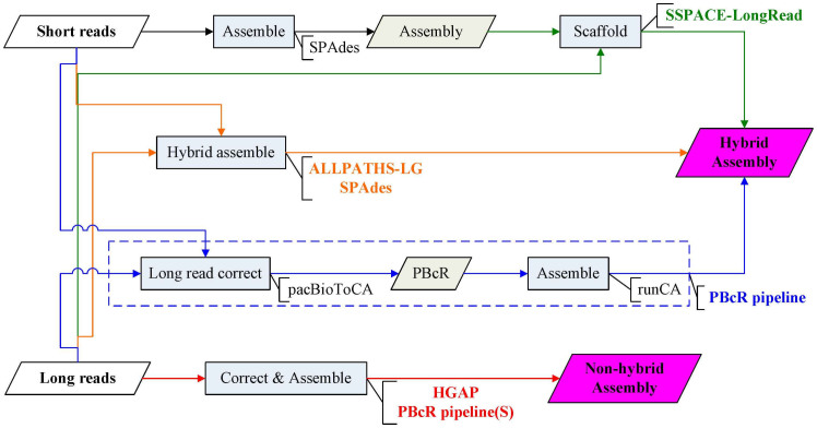 Comparisons of the assemblers conducted in this study. SSPACE-LongRead is a scaffolder using single molecule long reads to upgrade pre-assembled <t>contigs</t> constructed from short reads. ALLPATHS-LG and SPAdes are hybrid assemblers which take short reads and long reads as inputs. PBcR pipeline uses short reads to correct long reads by pacBioToCA, and then assembles corrected long reads (PBcR) by Celera assembler (runCA). Hierarchical genome-assembly process (HGAP) and PBcR pipeline via self-correction (PBcR pipeline(S)) take long reads as input to produce non-hybrid assembly.
