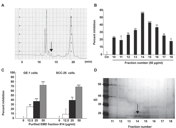 Effects of purified enamel matrix derivative (EMD) fractions on epithelial cell proliferation. (A) Results of reversed-phase high-performance liquid chromatography (HPLC) using C18 hydrophobic support. Lyophilized EMD was dissolved in 0.1% TFA, applied to reversed-phase HPLC, and eluted at 0.5 mL/minute. The arrow indicates the bioactive peak; (B) GE-1 cells were stimulated with each fraction (50 μg/mL) for 48 hours. Cell viability was determined using WST-1 analysis. The data show the percentage inhibition of cell proliferation from independent samples (n=3). The bars represent mean±standard deviation. Data was analyzed by Dunnett's test after one-way ANOVA (*P