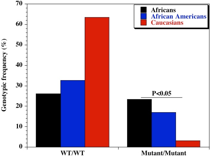 Genotypic distribution of CD209 gene promoter polymorphism (SNP-336 A/G; rs4804803) in Caucasian, African American and African healthy controls. Amplified PCR products were digested with MscI restriction endonuclease (Fisher Scientific, Waltham, Massachusetts, USA), and expressed on a 2% ethidium bromide-stained agarose gel. Homozygote wild type variant (snp-336A) showed no digestion (150 bp); homozygote mutant variant (snp-336G) produced two bands (131 and 19 bp) on digestion (lower band size not shown). Marker: 100 bp ladder, where the 500 bp band stains most intensely (New England Biolabs, Ipswich, Massachusetts, USA). Black bars: Africans; blue bars: African Americans; red bars: Caucasians.