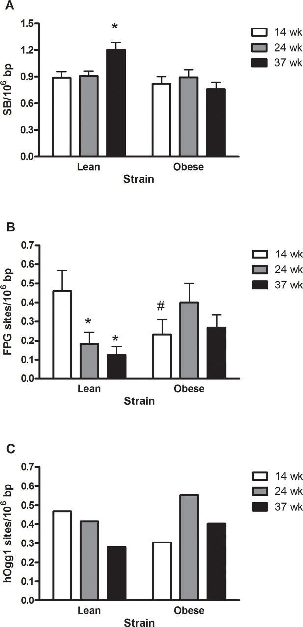 DNA strand breaks (A), FPG- (B) and <t>hOGG1-sensitive</t> sites (C) in the liver of lean or obese Zucker rats. The results are presented as mean and SEM (n = 7–8 per group). *P