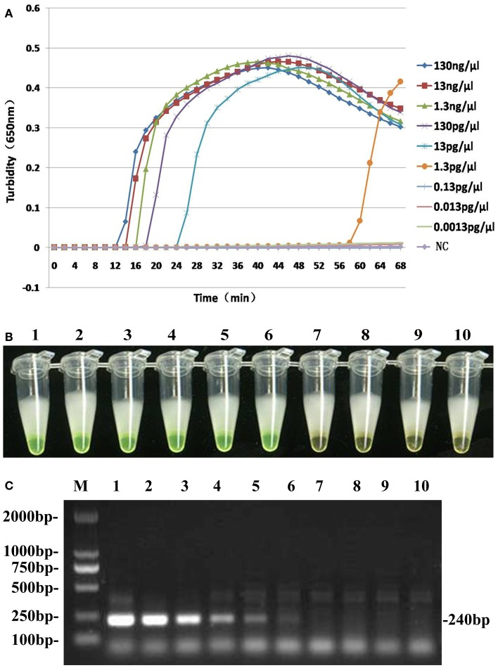 Comparative sensitivities of both <t>LAMP</t> assay (A,B) and traditional PCR (C) . Lane M: DL2000 Marker; Tubes 1–9 and lanes 1–9: 10-fold serial dilution pure genomic <t>DNA</t> extracted from B. pertussis (130 ng/μl to 0.0013 pg/μl); Tube 10 and lane 10: ddH 2 O as negative control.