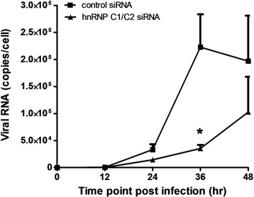 Effect of hnRNP C1/C2 knockdown on DENV RNA synthesis. Huh7 cells transfected with hnRNP C1/C2-specific or control siRNA were infected with DENV at MOI 0.03. Cells were collected at 0, 12, 24, 36 and 48 h post-infection and subjected to total RNA extraction and subsequent reverse transcription and real-time PCR for determination of DENV RNA expression. The amount of DENV RNA in virus-infected cells was reported as viral RNA copies per cell. Data represent mean and SEM of three independent experiments. Asterisks indicate statistically significant differences (*p