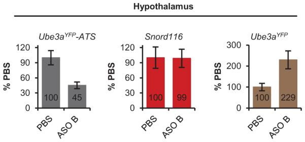 Snord116 was not reduced in the hypothalamus qRT-PCR on RNA isolated from Pat YFP mice 4 wk post-treatment of PBS or ASO B.