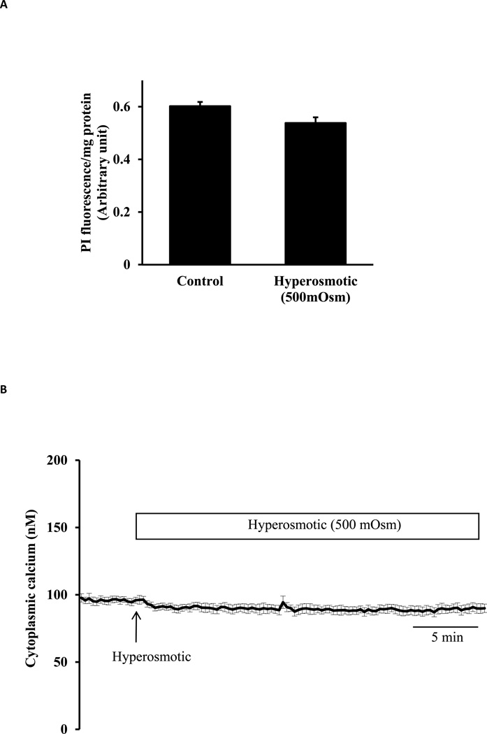 Studies on lens epithelial cells exposed to hyperosmotic solution (500 mOsm). Panel A shows propidium iodide (PI) uptake measured in cells incubated for 30 min in hyperosmotic (500 mOsm) solution (Hyper) or control isosmotic solution (Control) that contained PI (25 µM). The results are expressed as relative fluorescence/mg protein. The values are mean ± SE of results from 6 independent experiments. Panel B shows cytoplasmic calcium concentration measured for 5 min in isosmotic solution (Iso) remained unchanged when hyperosmotic solution (500 mOsm) was introduced for a further 30 min. Data from 15–30 individual cells were averaged and considered as n=1. Results are means ± SE of 5 independent experiments.