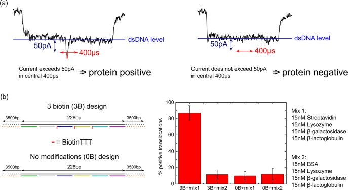 An assay for selective protein detection on a DNA carrier. (a) Events that begin and end with the one DNA double strand level are selected. If the current exceeds 50 pA from the baseline one DNA strand level within a central 400 μs window, the event is labeled positive for protein detection. Left shows an example of a positive translocation, right shows an example of a negative translocation. (b) Two DNA carrier designs used for experiment and controls. Three biotin (3B) design is as in Figure 3 with 3 biotin tags at the center. No modifications (0B) design has no biotin groups. Each design was incubated with one of two mixtures: mix1 contained the target streptavidin protein and mix2 contained BSA as a substitute control. A high percentage of threshold crossing events is only observed for the correct combination of binding site (biotin) and target protein (streptavidin). Error bars are the standard deviation from four independent nanopores (raw data is given in Tables S6–S9 ).