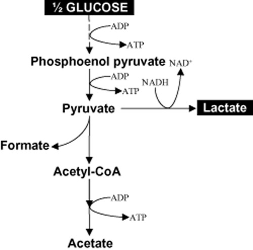Proposed metabolic pathway for lactate production from glucose in E . faecalis CBRD01.