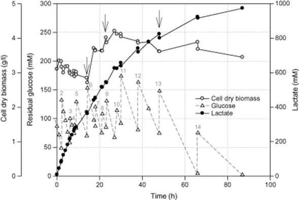 Time-course profile of growth, glucose consumption and lactate production by E . faecalis CBRD01 under anaerobic fed-batch fermentation. Arrows indicate addition of yeast extract at 5 g l −1 . The numbers 1–14 in grey indicate glucose addition at different time intervals and different concentrations (1–86.4 mM; 2–83.74 mM; 3–42.07 mM; 4–14.63 mM; 5–46.04 mM; 6–83.59 mM; 7–33.82 mM; 8–33.17 mM; 9–45.71 mM; 10–46.98 mM; 11–82.34 mM; 12–82.80 mM; 13–73.24 mM; and 14–70.75 mM).