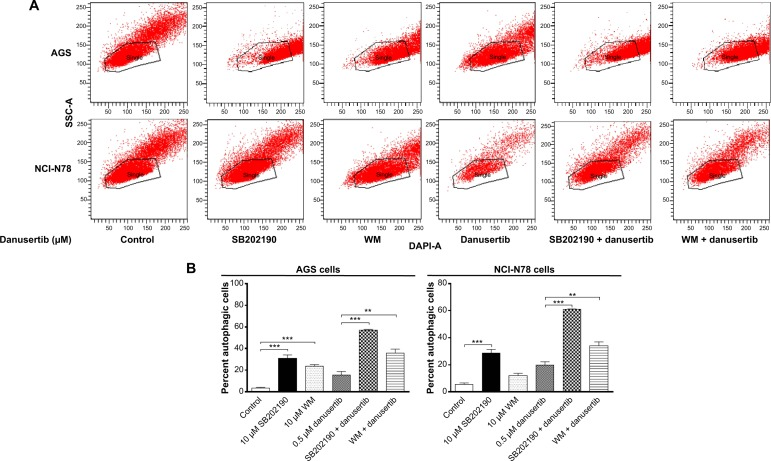 Danusertib induces autophagy via PI3K-mediated and p38 MAPK-mediated signaling pathways determined by flow cytometry. Notes: AGS and NCI-N78 cells were pretreated with SB202190 and WM for one hour and then incubated with danusertib for another 24 hours in the presence or absence of 0.5 μM danusertib. The cell samples were subjected to flow cytometry. ( A ) Flow cytometric plots showing autophagy of AGS and NCI-N78 cells and ( B ) bar graphs showing the percentage of autophagic AGS and NCI-N78 cells. Data represent the mean ± standard deviation of three independent experiments. ** P