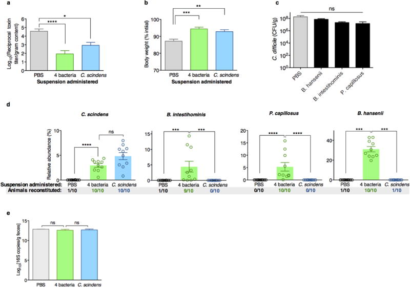 Adoptive transfer and engraftment of four-bacteria consortium or C. scindens ameliorates intestinal C. difficile cytotoxin load and acute C. difficile -associated weight loss C. difficile toxin load in antibiotic-exposed animals receiving adoptive transfers 24 hours after C. difficile infection challenge ( a ). Animals weights 48 hours after infection challenge ( b ) and C. difficile CFU 24 hours after infection challenge ( c ). Engraftment of bacterial isolates in the intestinal microbiota of antibiotic-exposed animals two days following adoptive transfer of B. intestihominis , P. capillosus , B. hansenii , and/or C. scindens ( d ). Intestinal bacterial density (feces) from antibiotic-exposed mice administered suspensions containing 4 bacteria, C. scindens , or vehicle (PBS) as measured by quantitative RT-PCR of 16S rRNA genes ( e ). ****P