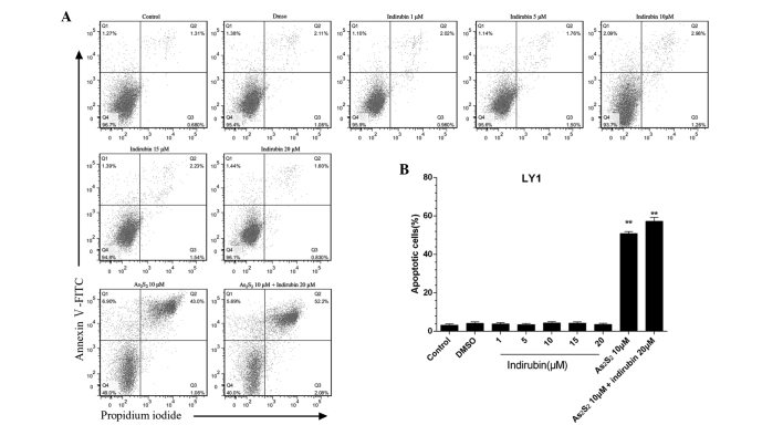 Effects of indirubin and arsenic disulfide (As 2 S 2 ), alone or in combination, on the apoptosis of LY1 cells. LY1 cells were incubated with different doses of indirubin (1, 5, 10, 15 and 20 μM) and also 10 μM As 2 S 2 and 20 μM indirubin, alone or in combination, for 48 h. (A) The apoptotic rate was determined using Annexin V-fluorescein isothiocyanate (FITC)/propidium iodide (PI) dual staining followed by flow cytometric analysis. The lower left quadrant (Q4) indicates the percentage of viable cells (Annexin V-FITC- and PI-negative), the upper left quadrant (Q1) indicates the percentage of early apoptotic cells (Annexin V-FITC-positive and PI-negative) and the upper right quadrant (Q2) indicates the percentage of late apoptotic cells (Annexin V-FITC- and PI-positive). (B) There were no significant effects on the rate of apoptosis of the LY1 cells following incubation with different doses of indirubin. However, significant differences were evident between the As 2 S 2 -treated group and the combination-treated group. Values are expressed as the mean ± standard deviation. ** P