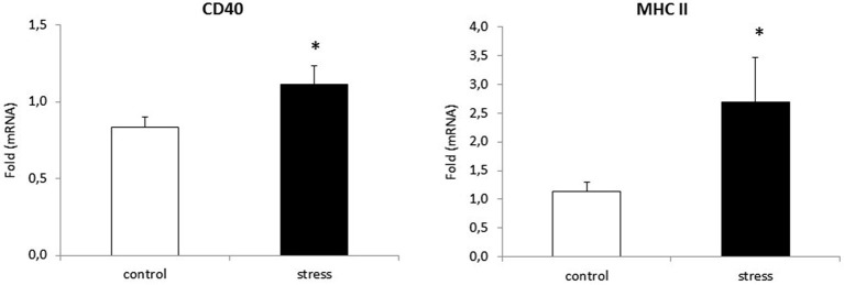 Prenatal stress enhances the expression of: CD40 and MHC II markers in microglial cell cultures . The expression of mRNA is presented as average fold ± SD from 3 independent experiments ( n = 6 in each group), * p