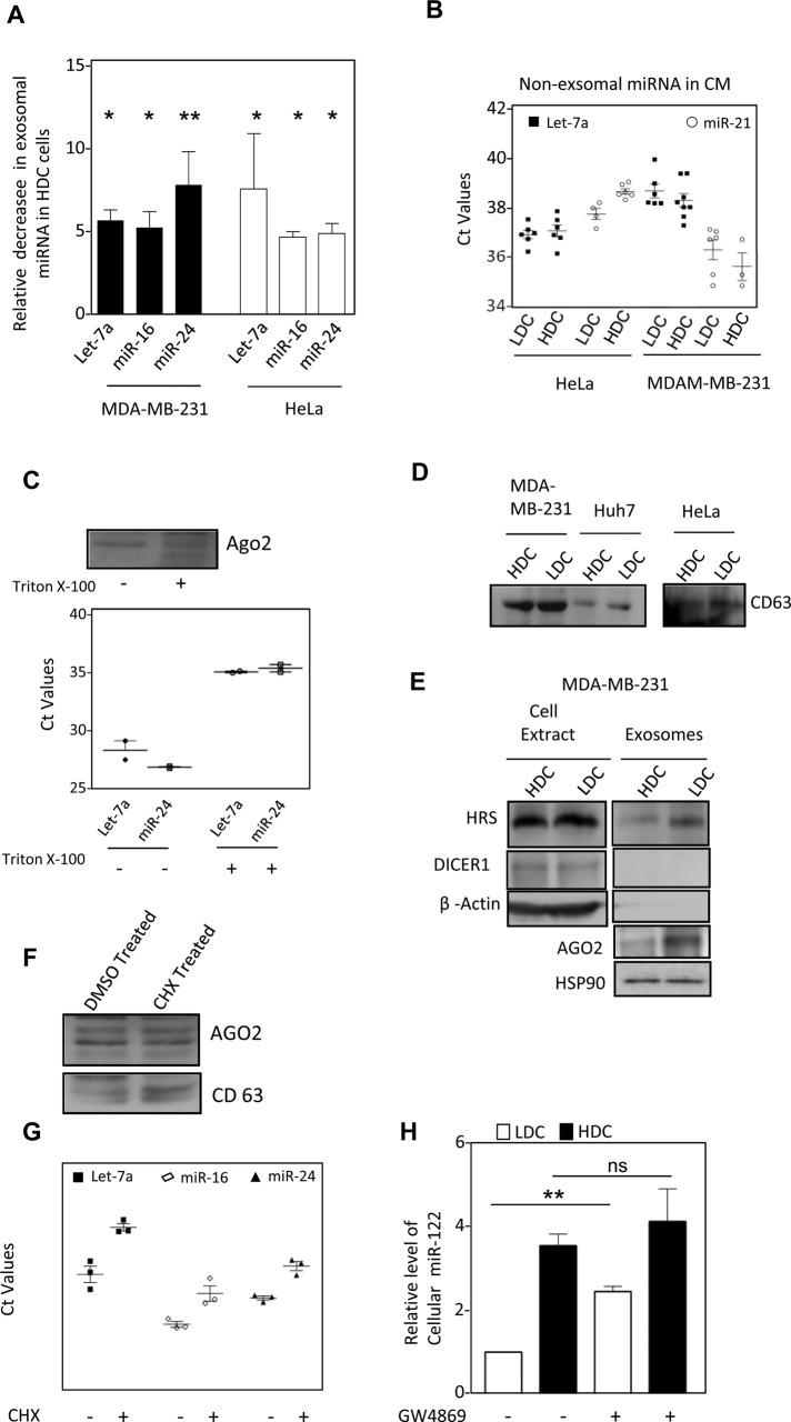 Exosomal export of miRNA is curtailed in cells grown to high density (A) Levels of let-7a, miR-16 and miR-24 miRNAs in FACS sorted identical number of exosomes released by HeLa and MDA-MB-231 cells grown to LDC or HDC cells (mean+/– SEM,  n  = minimum 3). (B) Amount of miRNA present in cell culture supernatant of HDC and LDC cells after removal of exosomes. (C) miRNA and AGO2 present in cell culture supernatant of HeLa cells is membrane protected. Conditioned medium from LDC state HeLa cells were treated with Triton X-100 for 15 min before they were used for exosome isolation. The estimation of miRNA was done by real time quantification and C t  values are plotted. AGO2 levels were detected by Western blot analysis. (D) Levels of CD63 exosomal marker proteins, present in cell equivalent amount of exosomes isolated from HDC and LDC state cells. (E) Relative levels of exosomal AGO2, HRS and HSP90 in exosomes isolated from LDC and HDC MDA-MB-231 cells. Absence of Dicer and β-Actin was used to rule out any cellular contamination in isolated exosomes. (F, G) Effect of CHX treatment on AGO2 and miRNA export via exosomes. Western blot for AGO2 in exosomes from DMSO or CHX treated LDC HeLa cells. CD63 levels were used to negate the variance in the release of exosomes as a consequence of CHX treatment (F). miRNA levels were quantified by real-time based quantification and Ct values were plotted (G). (H) Effect of GW4869 treatment on miRNA content of HDC and LDC state. Real time PCR based estimation of miR-122 was done with RNA from miR-122 expressing HeLa cells grown to either LDC or HDC state in the presence or absence of GW4869. ns, nonsignificant, * p
