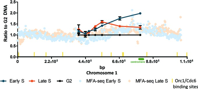 Chromosome 1 replication in unperturbed cells. T. brucei replication was mapped by MFA using quantitative PCR, and compared to MFAseq. The line graph shows qPCR at a number of loci within a central 347 kb region of chromosome 1: at each locus the relative quantity of early S phase (blue), late S phase (orange) and G2 phase (black) DNA is shown, in all cases normalized to qPCR of a region of kinetoplast DNA (not shown); G2 values at each locus are set at 1, and the S phase samples shown as a proportion of that value (error bars indicate standard deviation from three experimental repeats). Locations of the qPCR loci within the chromosome (bp) are shown (points in the graph from 5′ to 3′ indicate amplified regions from chromosome 1: nt 397 255–397 535, nt 440 426–440 525, nt 463 829–463 933, nt 504 971–505 071, nt 549 145–549 244, nt 664 782–664 876 and nt 797 547–797 644). MFAseq mapping is shown as dots across the whole chromosome: the ratio of the read-depth between the early (light blue) or late S phase (light orange) and G2 samples is shown, where each dot represents 2500 bp.