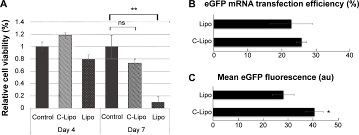 C-Lipo with reduced lipofectamine amount transfects cardiac fibroblasts efficiently without significant toxicity. Notes: ( A ) Cell viability of C-Lipo (0.5 μL of lipofectamine with 7 μg of CRPPR-R9 peptide per 1 μg <t>mRNA)</t> after daily transfections. Cardiac fibroblasts were transfected with C-Lipo and Lipo daily for 1 week and cell viabilities were measured on days 4 and 7. C-Lipo allows mRNA transfection in cardiac fibroblasts without significant toxicity for 1 week compared to Lipo, which causes significant toxicity. ( B ) and ( C ) Flow cytometry analyses of cardiac fibroblasts treated with C-Lipo and Lipo. C-Lipo shows comparable levels of transfection efficiency and higher mean <t>eGFP</t> fluorescence compared to Lipo. The results represent the mean ± SE, n=5. * P