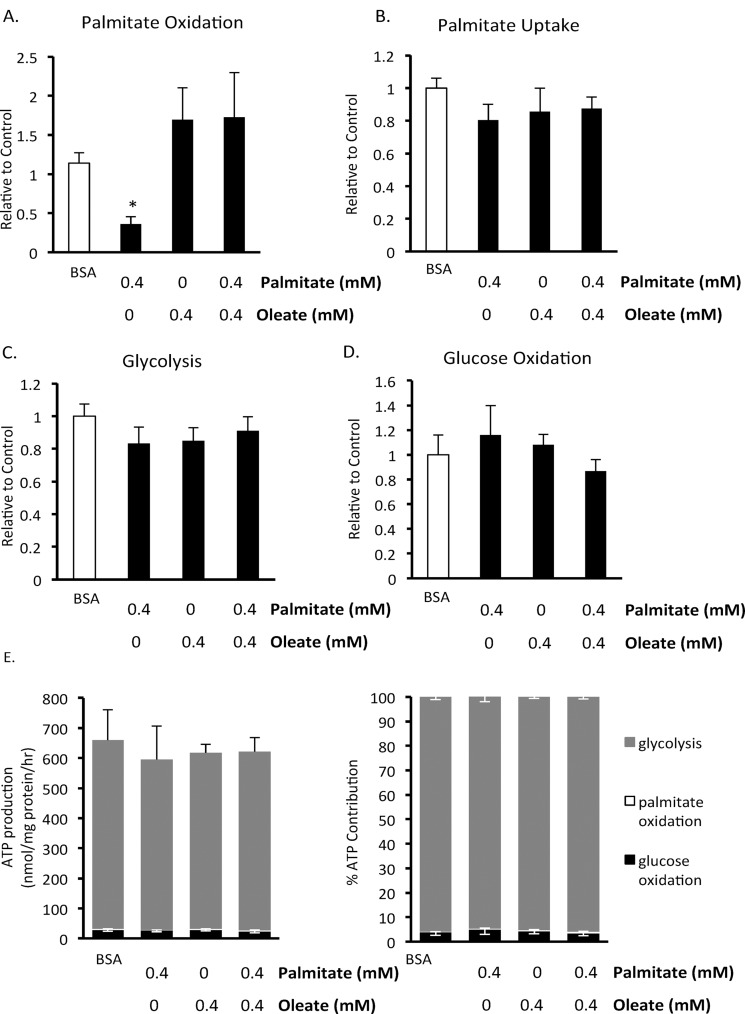 Effect of 24 hour exposure to fatty acids on human BMMSC energy metabolism. A) Palmitate oxidation, B) palmitate uptake, C) glycolysis, and D) glucose oxidation were measured in human <t>BMMSCs</t> that had been treated for 24 hr with either 0.55 mM albumin <t>(BSA</t> group) or 0.55 mM albumin and 0.4 mM palmitate and/or 0.4 mM oleate prior to these metabolism measurements being made. n = 5–8 The graphs indicate which groups were exposed to these different treatments for the 24 hr prior to the metabolism measurements. During each assay all groups were given Krebs buffer supplemented with 5 mM glucose and 0.4 mM palmitate bound to 0.55 mM albumin. In addition, the Krebs buffer was supplemented with either [U- 14 C]glucose, [1– 14 C]palmitate, or [5– 3 H]glucose for the measurement of glucose oxidation, palmitate oxidation and uptake, or glycolysis, respectively. E) The contribution of metabolic pathways to ATP production were calculated from the metabolic rate results. * Significantly different from all groups. Values are shown as mean ± SEM.