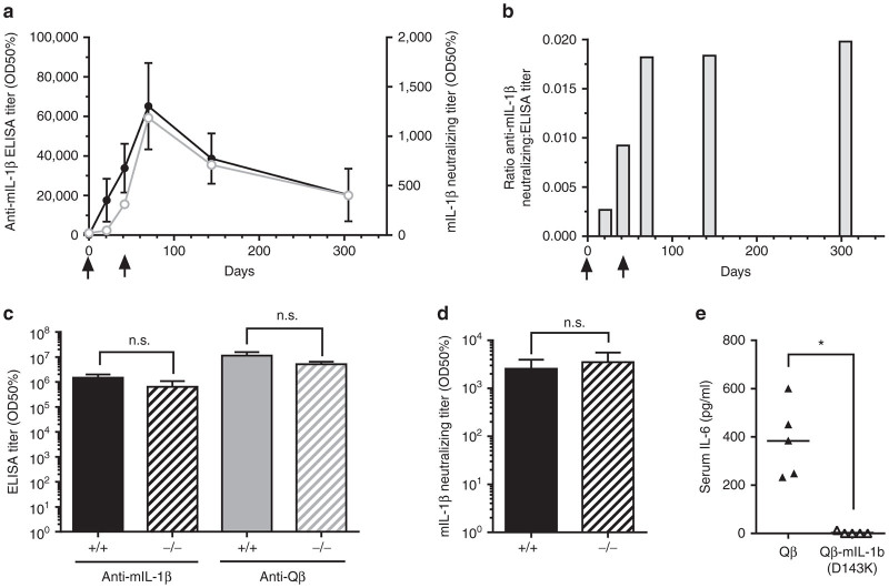 Immunogenicity of Qβ-mIL-1b(D143K) in mice. ( a ) Induction of anti-mIL-1β antibody titers. Female C57BL/6 mice ( n = 5) were immunized twice (days 0 and 42, arrows) with 10 µg of Qβ-mIL-1b(D143K) in the presence of Alum. At the indicated time points, mouse IL-1β (wild type)-specific IgG antibody titers were measured by ELISA (filled black circles). At the same time points IL-1β neutralizing titers were determined ex vivo in the HeLa IL-6 secretion assay as described in Materials and Methods (open gray circles). Shown are mean titers ± SEM. ( b ) Ratio of IL-1β neutralizing versus ELISA titers over time. The ratios of IL-1β- neutralizing versus IL-1β-specific IgG ELISA titers were calculated for the group means of each time point of the experiment described in a . Vaccine injections are indicated by arrows. ( c ) Antibody responses in IL-1β-deficient mice. Groups ( n = 4) of female C57BL/6 IL-1β-deficient mice (-/-) or C57BL/6 control mice (+/+) were immunized on days 0, 14, and 28 with 10 µg of Qβ-mIL-1b(D143K) in the presence of Alum. On day 42, mouse IL-1β (wild type)- as well as Qβ-specific IgG antibody titers were measured by ELISA. Shown are mean titers ± SEM. ( d ) Induction of IL-1β-neutralizing titers in IL-1β-deficient mice. Mouse IL-1β (wild type)-neutralizing titers were determined in sera from day 42 of the experiment described in c . Shown are mean titers ± SEM. ( e ) In vivo neutralization of IL-1β in Qβ-mIL-1b(D143K)-immunized mice. Groups of female C57BL/6 mice ( n = 5) were immunized s.c. on days 0, 14, and 28 with 1 µg of Qβ-mIL-1b(D143K) or Qβ VLPs as control. On day 42, mice were challenged with an i.p. injection of 1 µg wild-type mouse IL-1β. Three hours after challenge, sera were collected and IL-6 levels were quantified with a Quantikine ELISA kit. Shown are data from individual mice and group means (* P