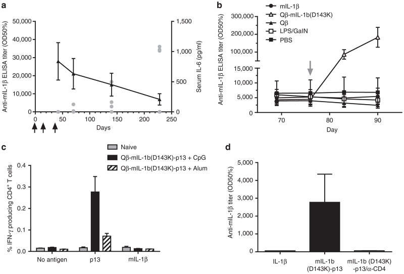 Safety assessment of the Qβ-mIL-1b(D143K) vaccine in mice. ( a ) Time course of anti-IL-1β antibody responses. Female C57BL/6 mice ( n = 4) were immunized s.c. on days 0, 14, and 35 (arrows) with 1 µg of Qβ-mIL-1b(D143K). On days 42, 70, 140, and 228, mice were challenged with i.p. injections of 1 µg wild-type mouse IL-1β. Three hours after challenge, sera were collected, and IL-6 levels were quantified by ELISA. Single data points (filled gray circles) represent individual animals. Antimouse IL-1β (wild type) IgG antibody titers were determined at the same time points by ELISA and are represented as group means ± SEM (black triangles). ( b ) Effect of increased IL-1β levels on antimouse IL-1β IgG antibody titers. Groups of female C57BL/6 mice ( n = 5) were immunized s.c. on day 0 with 50 µg Qβ-mIL-1b(D143K). On day 76, mice received either an i.v. injection of 100 ng wild-type mouse IL-1β (in 100 µl PBS), an i.p. injection of a mixture of 1 ng Escherichia coli lipopolysaccharide, and 20 mg N-galactosamine (Sigma-Aldrich), or a s.c. injection of 50 µg Qβ-mIL-1b(D143K). Control groups received either an i.v. injection of 100 µl PBS or a s.c. injection of 50 µg Qβ VLPs. Mice were bled on days 69, 76, 83, and 90 and mouse IL-1β (wild type)-specific IgG antibody titers were determined by ELISA. Shown are group means ± SEM. ( c ) Measurement of IL-1β-specific T cell responses after vaccination with Qβ-mIL-1b(D143K). Groups of mice were immunized with Qβ-mIL-1b(D143K)-p13 in the presence of CpG or Alum, respectively, as described in Materials and Methods . One group of female C57BL/6 mice was kept naive. After immunization, splenocytes were isolated from all mice and stimulated with BMDC that had been loaded either with synthetic p13 peptide or with wild-type mouse IL-1β. Nonspecific IFNγ-release from CD4 + T cells was determined by incubation of splenocytes with mock-pulsed BMDC (no antigen). Antigen-specific IFNγ-producing CD4 + T cells were determined by fluorescence-a