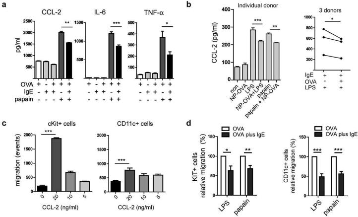 Antigen-specific <t>IgE/FcεRI-crosslinking</t> on activated DCs inhibits the production of proinflammatory cytokines and chemokines resulting in impaired migration of inflammatory cells. (a) IgE-crosslinking inhibits the papain-induced production of CCL-2, IL-6, and TNF-α by murine DCs. (b) Inhibition of CCL-2 production in human DCs by IgE/FcεRI-crosslinking. (c) The chemokine CCL-2 shows strong chemotactic activity for c-Kit + mast cell progenitors and CD11c + DC. Indicated concentrations of recombinant CCL-2 were added to the medium in the lower wells of transwell plates and the migration of cells from mast cell progenitor cultures towards the chemokine was determined. (d) Antigen-specific IgE/FcεRI-mediated DC activation (OVA plus IgE) inhibits migration of bone-marrow derived mast cell progenitors and DC. DCs were activated as indicated and DC-conditioned supernatants were used for chemotaxis assays. Migratory response of cKit + cells and CD11c + cells towards DC-conditioned supernatants was calculated from 3 independent experiments. Migratory response of DC stimulated with LPS or papain in the absence of IgE/FcεRI-mediated DC activation (OVA alone) was set at 100 %.