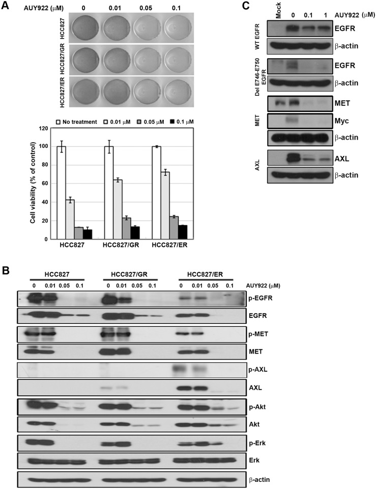 Suppression of MET and AXL by AUY922 in resistant cell lines. A , Cells were treated with the indicated doses of AUY922 for 72 hours in medium containing 1% FBS. Attached cells were stained with trypan blue solution (top). Cell viability based on cell counting is also shown (bottom). Bars represent the mean ±SD of three wells. B , Cells treated with AUY922, similar to panel A. After 48 hours, cells were harvested and EGFR-related signaling molecules were evaluated using western blotting. C , LK2 cells were treated with vector-containing wild-type EGFR, del E746-E750, MET, or AXL and the indicated doses of AUY922 for 12 hours.