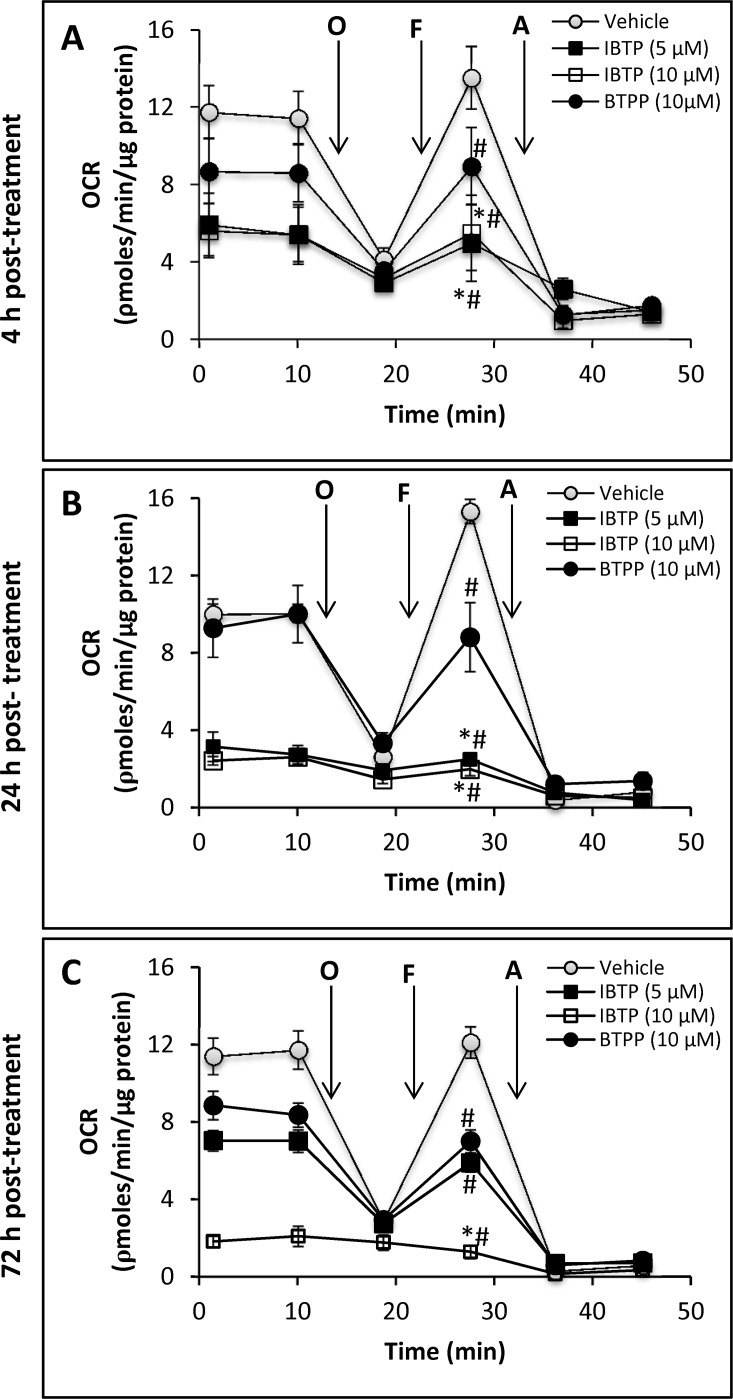 Effect of IBTP treatment on mitochondrial respiration of <t>MB231</t> cells. Panel A: Cells plated on XF24 plates were treated with the indicated concentrations of IBTP or BTPP for 4h in 0.5% FBS-containing medium. After treatment, the medium was removed and replaced with XF assay medium <t>(DMEM,</t> containing 5mM glucose, 0.5% FBS, 5mM HEPES without bicarbonate) and equilibrated 1h before OCR measurement. Panel B: Cells plated on 6-well plates were treated with the indicated concentrations of IBTP or BTPP for 4h. After the incubation, the cells were harvested immediately by trypsinization. The harvested cells were replated in XF24 plates and allowed adhere for an additional 20h in complete medium containing 10% FBS (total 24h). The medium was removed and replaced with assay medium and equilibrated 1h before OCR measurement. Panel C : After 4h of IBTP or BTPP treatment, the medium was replaced with complete medium containing 10% FBS, and incubated for 48h. The cells were harvested after 48h, replated in XF24 plates and allowed adhere for an additional 20h in complete medium. The medium was replaced with assay media and incubated 1h before measurement of OCR (total duration 72h).