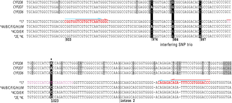 Sequence Comparison of CYP2D6 variants, CYP2D7 and CYP2D8 . Each line represents the nucleotide sequence for a given gene or genetic variant. The key CYP2D6*17 SNP is highlighted by a black background and designated by an asterisk *. The tentatively interfering SNP trio is also indicated in the top panel by a black background; differing positions are highlighted ( CYP2D6*4A, B, C, F, G, H, J and M have the SNP trio, while *4C, D, E and K do not) *2E and *4L contain only the SNP at position 997. Light grey boxes emphasize differences between CYP2D6, 2D7 and 2D8 . Regions targeted for PCR primer and probe binding are shown in bold red type and plain green type, respectively. The red arrows above red letters denote the primer binding sites for the original (C__2222771_40) TaqMan assay while blue arrows indicate the primer sequences utilized for the CMH custom-made TaqMan assays. The probe binding site for the latter is shown by green letters.