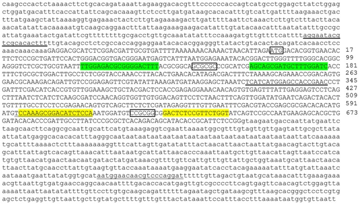 Genomic DNA sequence of first exon (in upper case) and flanking intron regions (in lower case) of nuclear progestin receptor (nPR or pgr ) . First and second TALEN targeting sites are highlighted either in green or yellow, respectively. Translation start site (ATG) and restriction enzyme recognition sites ( Bss HII: GCGCGC; Sac II, CCGCGG) are indicated by box. Forward and reverse PCR primers for amplification of genomic region including TALEN targeting sites are underlined. The numbers on the far right of the figure indicate the positions of the nucleotide counting from the ATG starting site. Transcriptional and translational start sites were manually annotated based on our previous published pgr sequence [( 25 ); Genbank access number EF155644] due to annotation errors in databases.