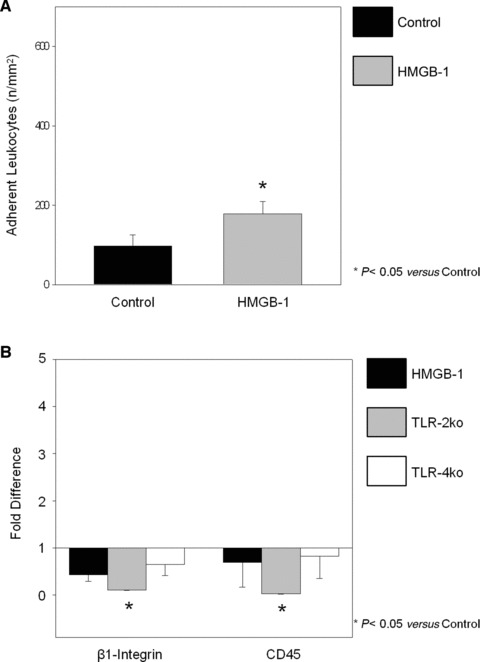 Endogenous leukocyte adhesion on cremaster muscle 15 min. after direct HMGB-1 superfusion. (A) Number (n/mm 2 ) of adherent leukocytes in 'Control' and 'HMGB-1' groups. (B) Quantitative real-time PCR analysis of the pro-inflammatory signals β1-integrin and CD45 of 'Control', 'HMGB-1', 'TLR-2ko' and 'TLR-4ko' groups. The average mRNA expression level of β1-intergrin and CD45 and c-kit in 'Control' cremasters was arbitrarily given a value of 1 (line) (* P
